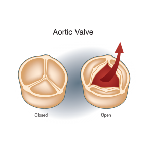cardio, arterial, illustrations, aortic valve